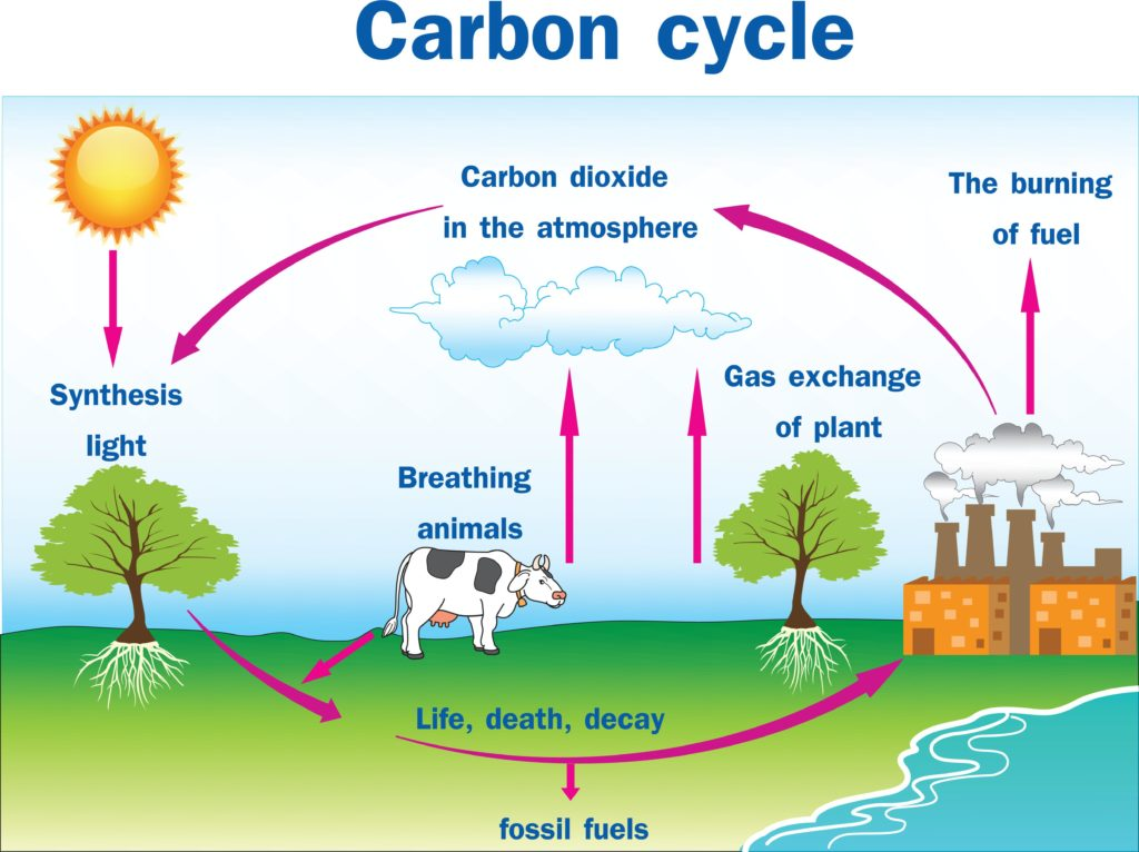 Gardening Basics  Carbon Cycle And Carbon Sequestration