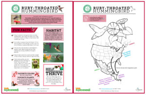 A small image of the 2-page Ruby-throated hummingbird fact sheet and coloring page. Specific words aren't legible, but pink boxes of text and a map of part of North America and a drawing of a hummingbird are visible.